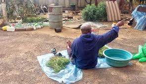 Real Traditional Healer